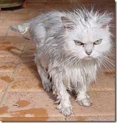 Scoured cat