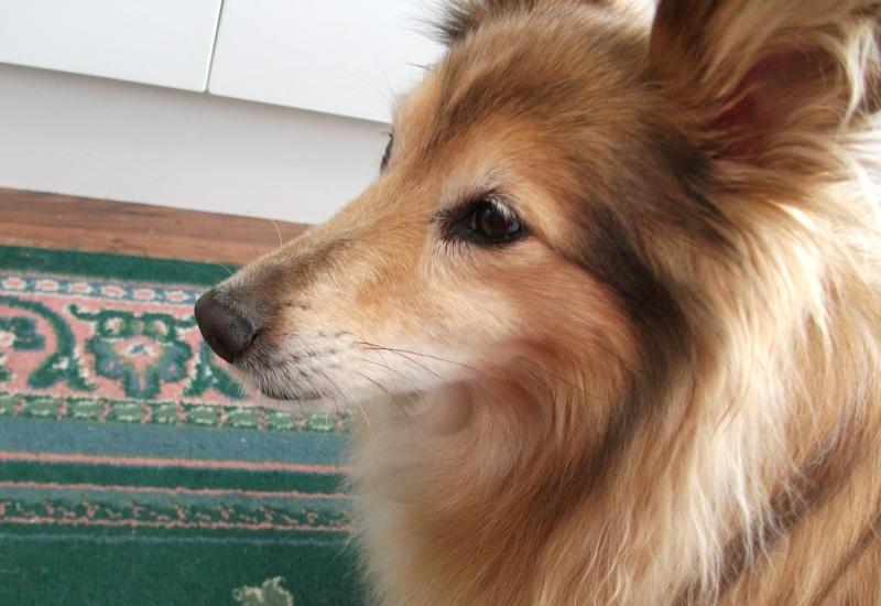 Dogs Have Eyelashes Grannymar