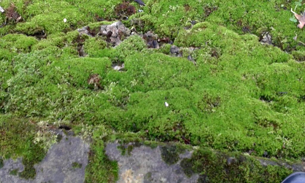 Rich green moss